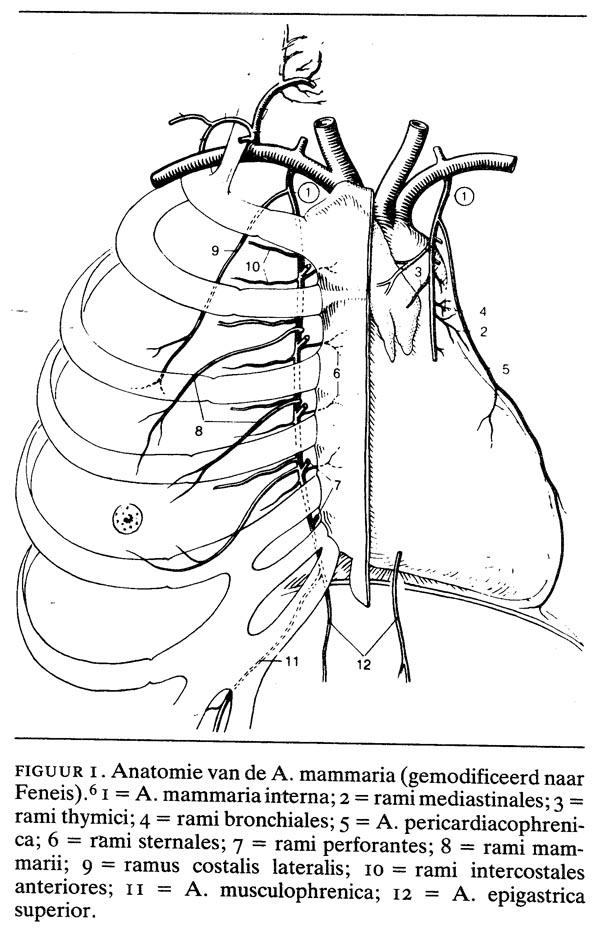 De arteria mammaria in de hartchirurgie: \'terug van weg geweest ...