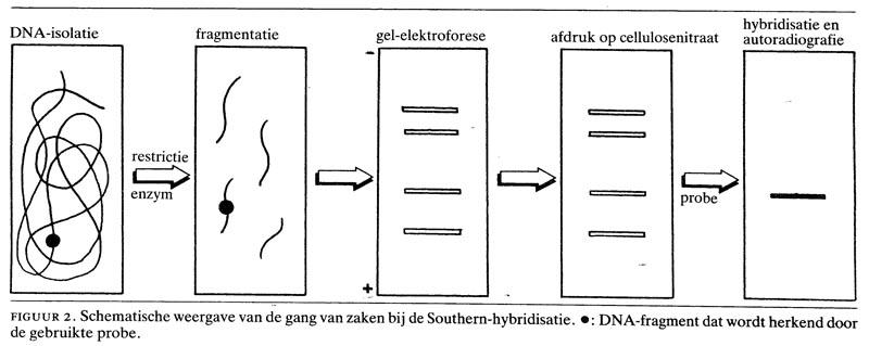 Methoden van de moleculaire genetica nederlands tijdschrift voor geneeskunde - Plaat hoek bakken ...