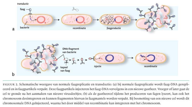 Horizontale overdracht van bacteriële genen en de ...