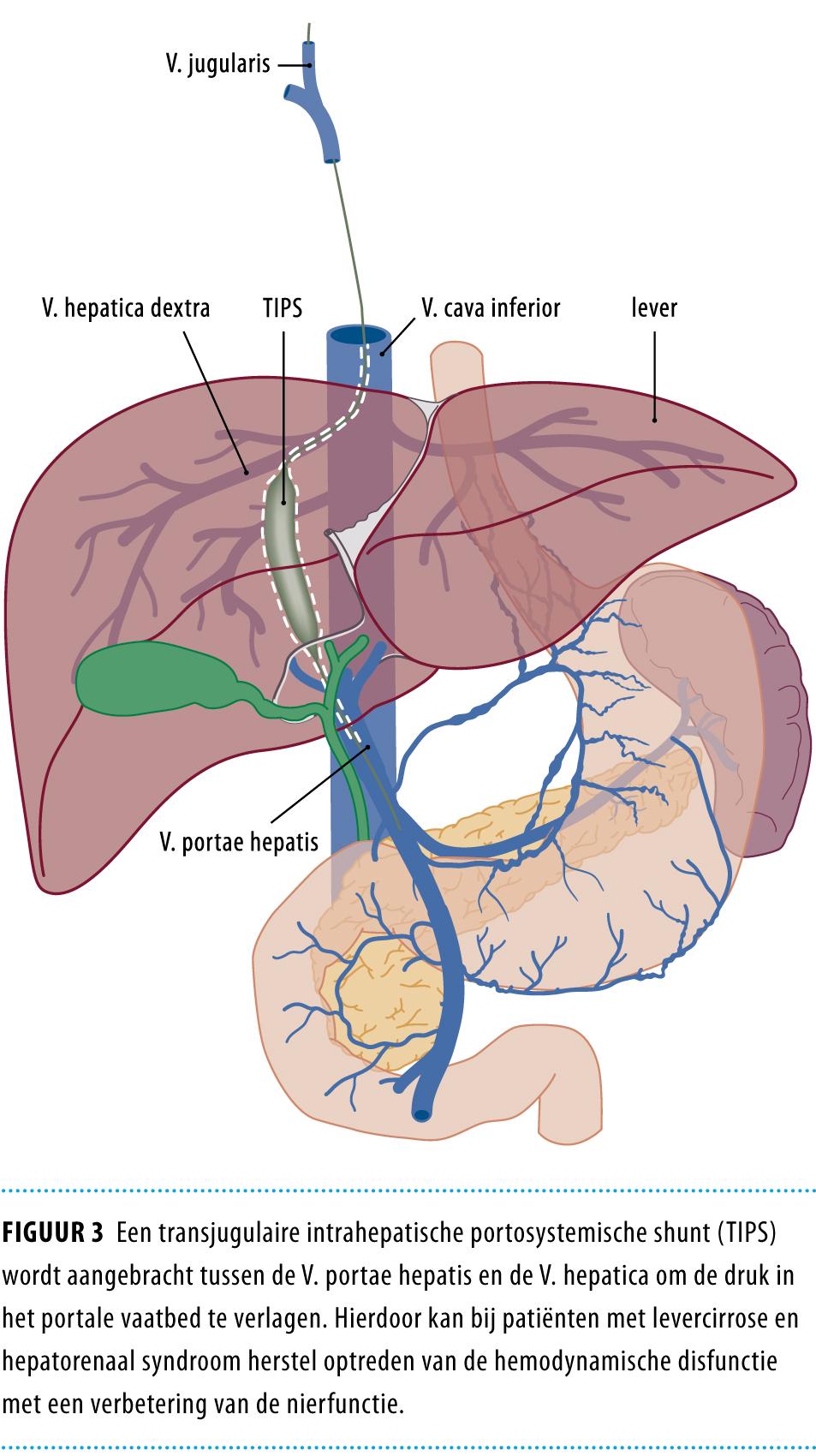 kenmerken leverfalen