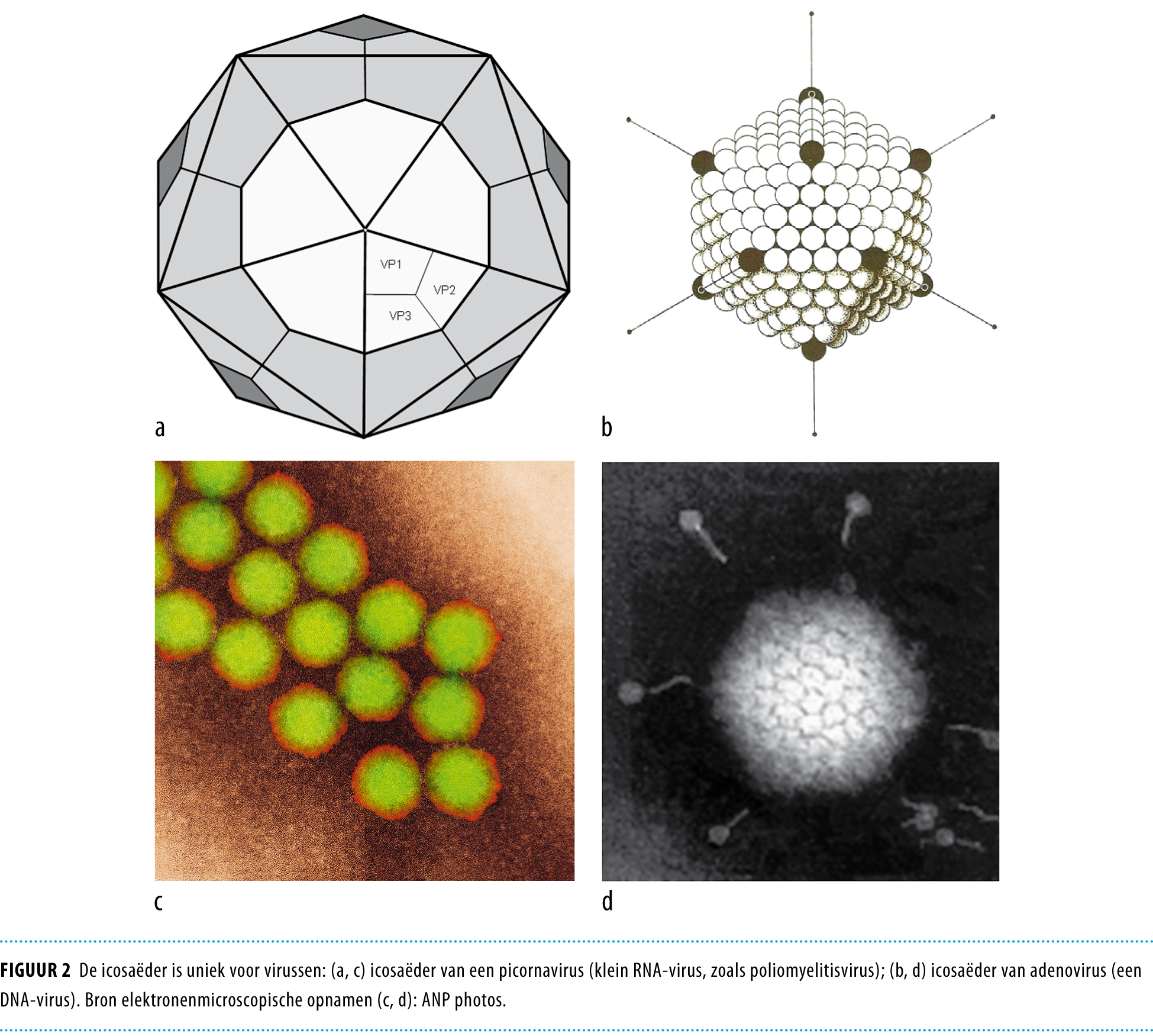 Virus en evolutie | Nederlands Tijdschrift voor Geneeskunde