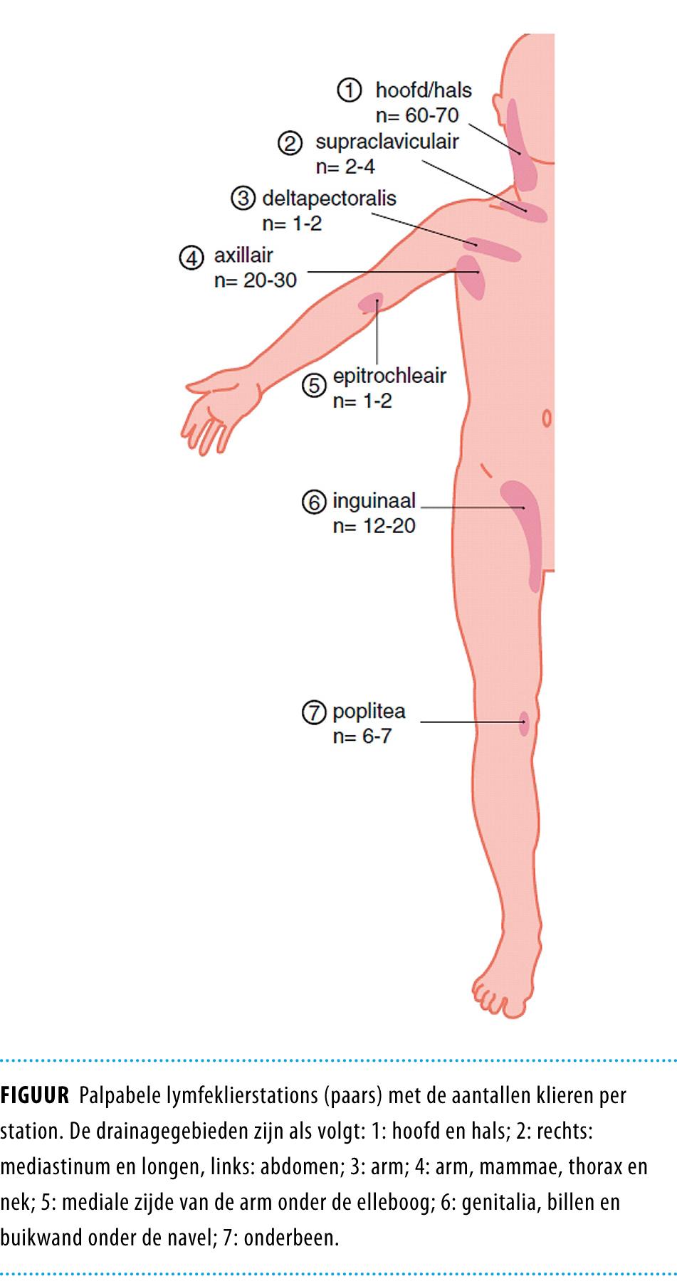 locatie lymfeklieren